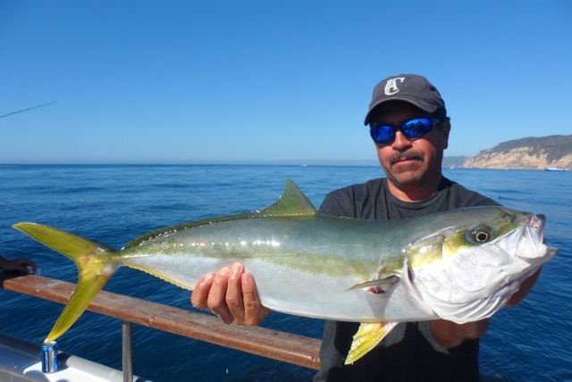 Nice yellowtail caught september 1 2012 channel islands for Deep sea fishing in california