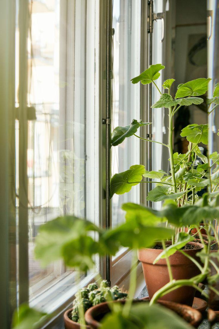 Plants interior design scandinavian  Green Långholmsgatan 13 A, 2 tr ög | Fantastic Frank