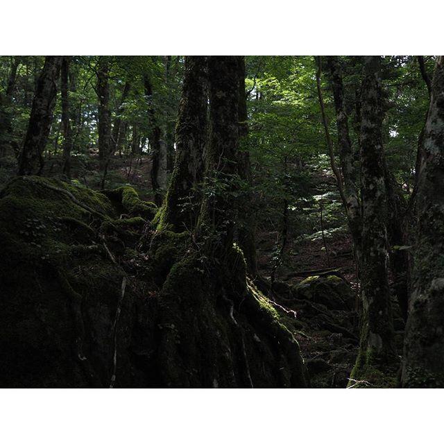【akimarun】さんのInstagramをピンしています。 《美しい森でした。 #西大台 #西大台利用調整地区 #大台ケ原 #上北山村 #奈良県 #森 #自然 #forest #nature #nara #mountains》