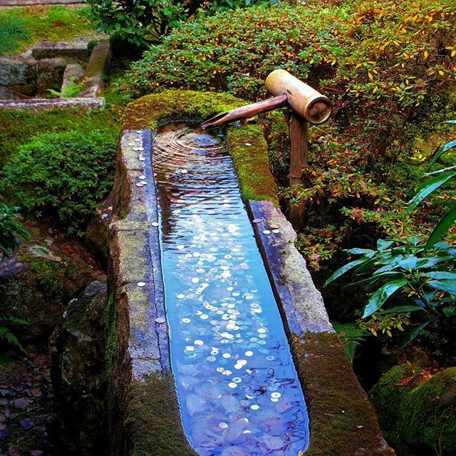 Ready for misogi this week  // Készen állok a misogira  #szegedbudokan #martialarts #academy #szeged #harcművészet #seibukan #jujutsu #seibukanjujutsu #shinto #shrine #blessing #tiger #fire #misogi #purefication #elements #nature #water #lovewhatyoudo #mylife #japan #japanese #garden #harmony #inspiration #quote #kyoto #temple