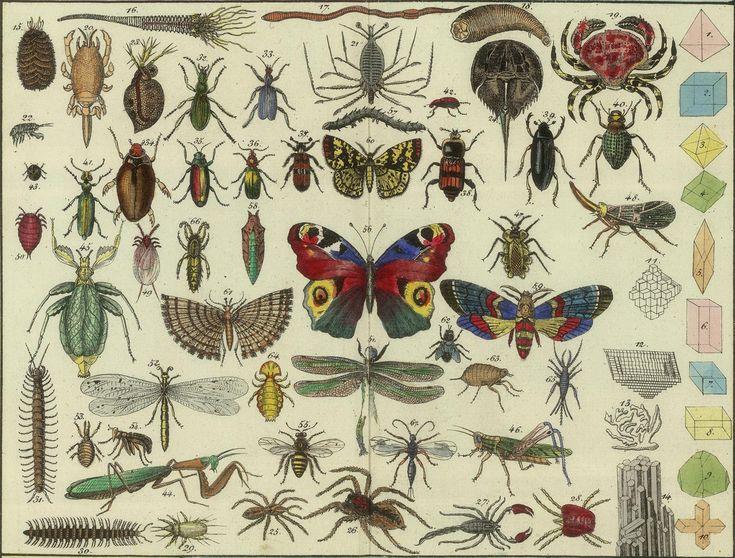https://flic.kr/p/7porxC | Tableau d'histoire naturelle Annelides, Crustaces, Arachnides, etc, 1834 (detail) | bibliodyssey.blogspot.com/2009/12/victorian-infographics....