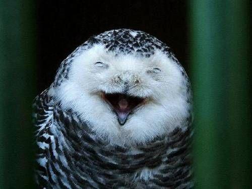 Jolly Owl