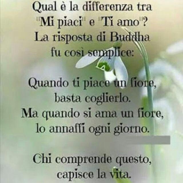 Mi piaci o ti amo? ! Buddha
