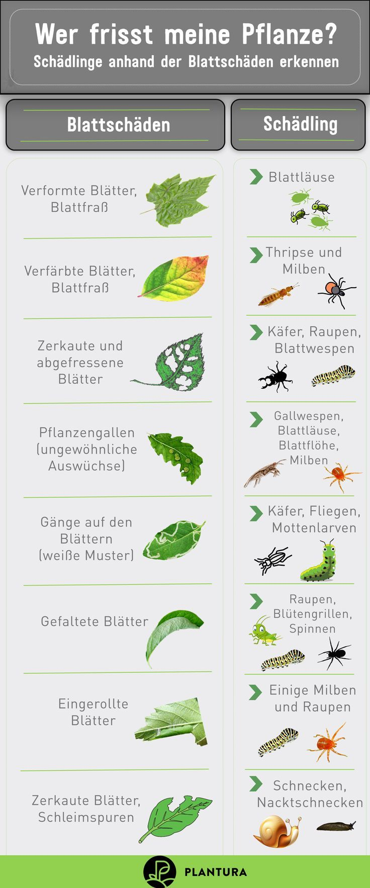 10 home remedies for pests in the garden