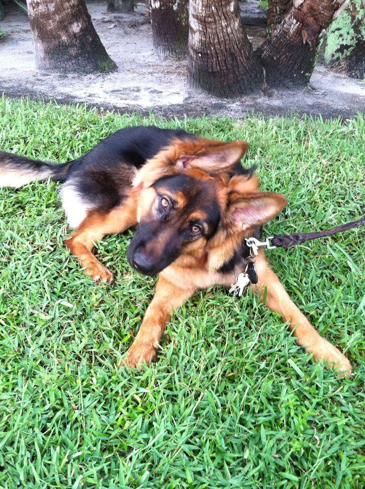 German Shepherd rock! This is my puppy Wolfie  can u say cute!!!