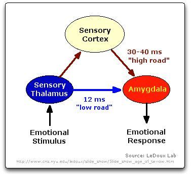 Phd thesis neuroscience