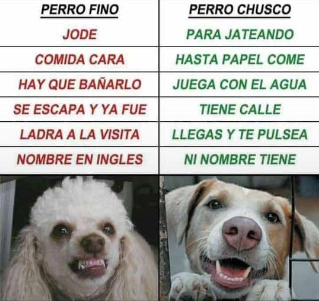 Pin De Omar Castillo En Chistes Y Mas Memes Graciosos Memes Chistosisimos Perros Finos