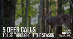 Want to actually attract a buck this hunting season and sick of gimmicks? Read on to learn the only 5 vocal deer calls you'll ever need again.