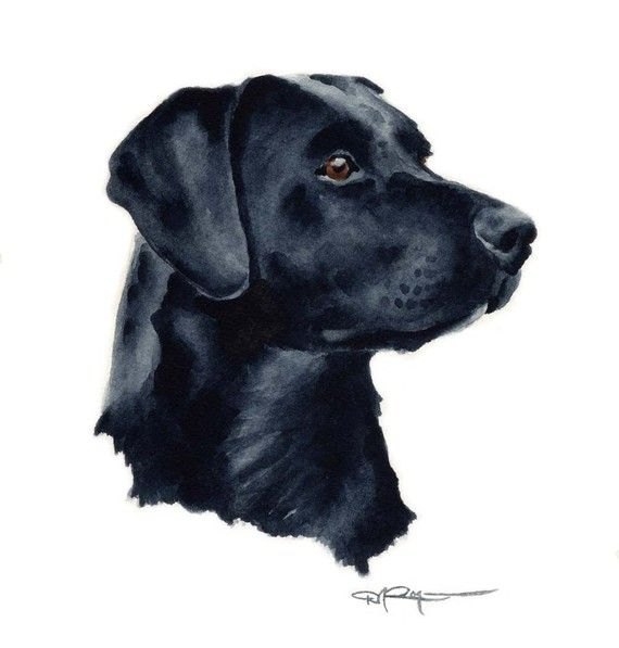 BLACK LAB Dog Art Print Signed by Artist DJ Rogers by k9artgallery