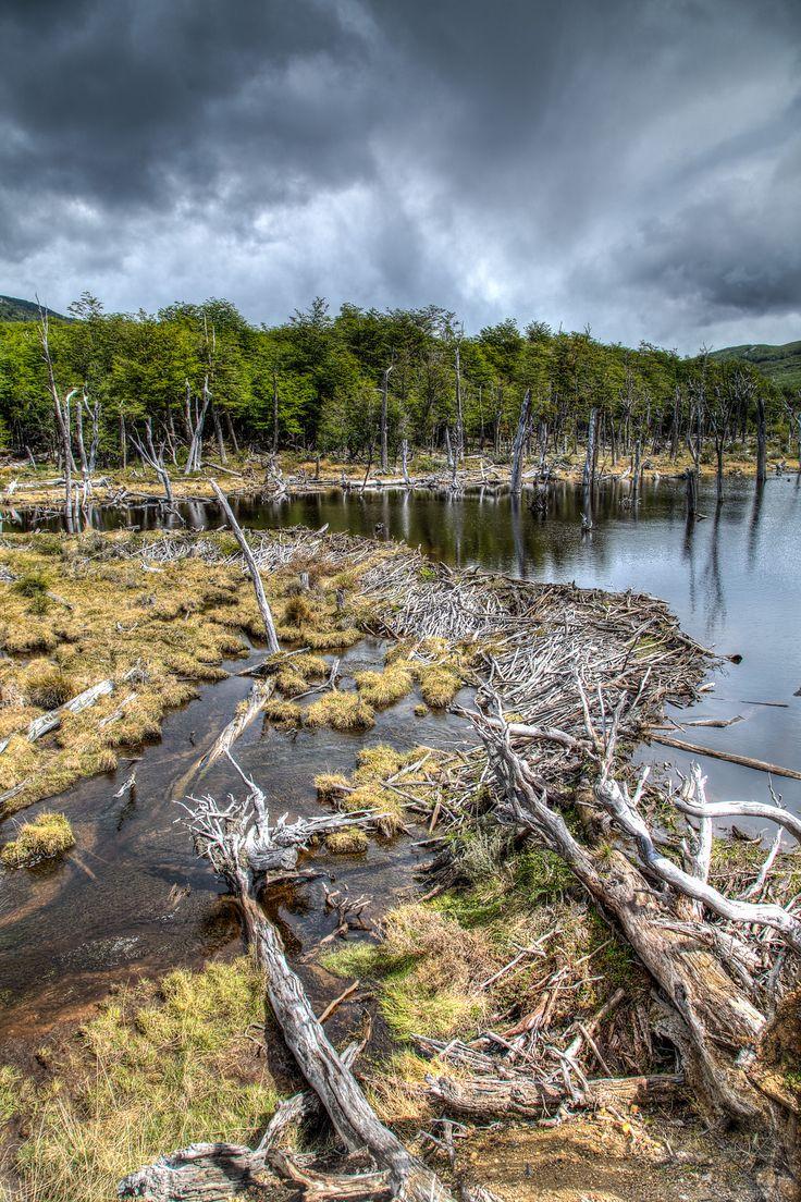 Beaver Dam, Tierra del Fuego // Anne Dirkse