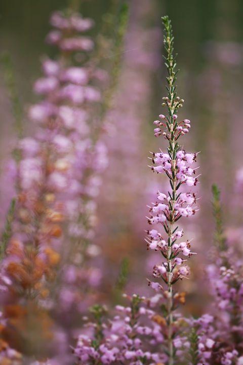 15 Blumen, die in Ihrem Herbstgarten sein müssen