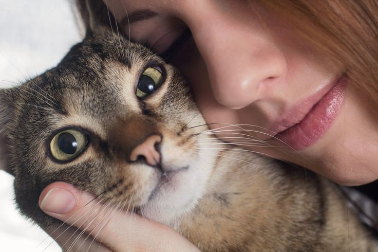 Cirmos and me / my sweet cat
