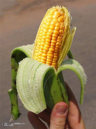 Top 20 des croisements de fruits et légumes improbables, OGM power