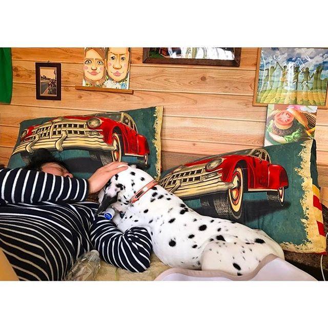 ♬*° ・ gm〜🌞 ・ 朝からベッドではちゃめちゃ😟 パパは怒るに怒りきれませーん(笑) 可愛いから😕💕笑 ・ それにしてもでかい。 でかくなった。 突進されると痛いし 寝てる時ジャンプされたら アバラ折れたんじゃないかってほど重い😱 ・ まだまだおっきくなるけど 抱っこできなくなるのは寂しいな( .. ) ・ #ダルメシアン#子犬#パピー#4ヶ月 #dalmatian#dog#baby#boy #いぬすたぐらむ #dogstagram  #いぬばかぶ部 #愛犬 #大型犬#大型犬のいる生活