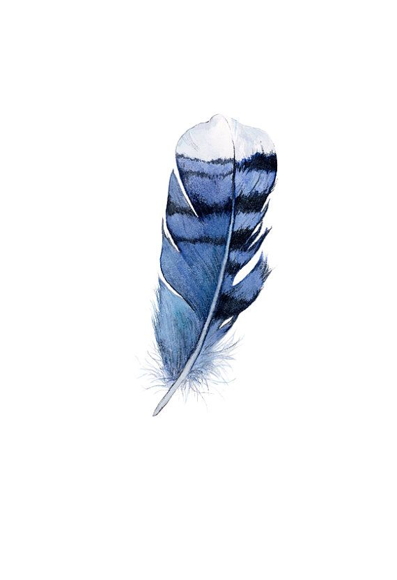 Blue Feather Blue Jay Feather Watercolor Feather by SuisaiGenki, $20.00