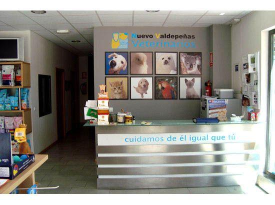 17 mejores ideas sobre consultorio veterinario en - Diseno de clinicas veterinarias ...