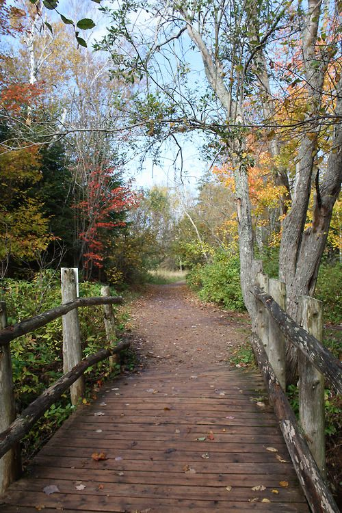 """Lover's Lane"" in Prince Edward Island, Canada"