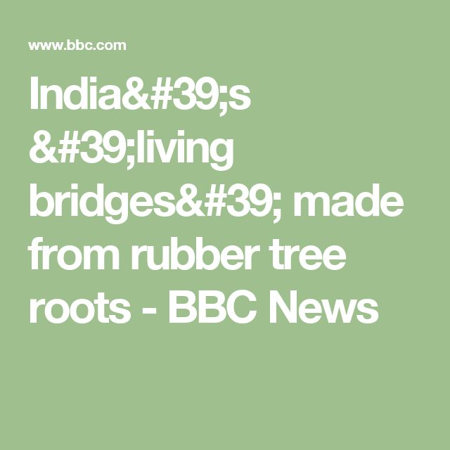 India's 'living bridges' made from rubber tree roots - BBC News