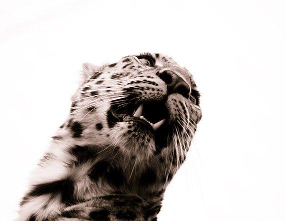 Leopard Wall Decor - Sepia Animal Photography, Monochrome Fine Art Photo, Nature Home Decor Wall Art 8x10 $30