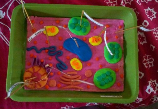 Sel tumbuhan, plant cell model