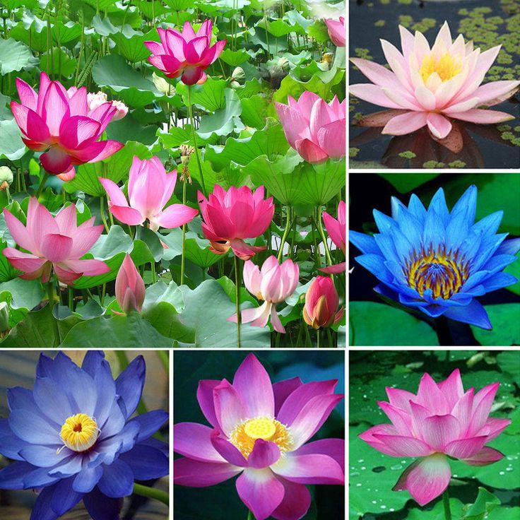 best 25+ montre lotus ideas on pinterest | compas, tattoo boussole