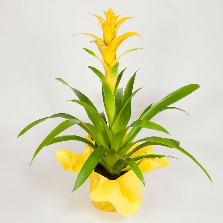 12 best nuestras plantas images on pinterest | plants, html and
