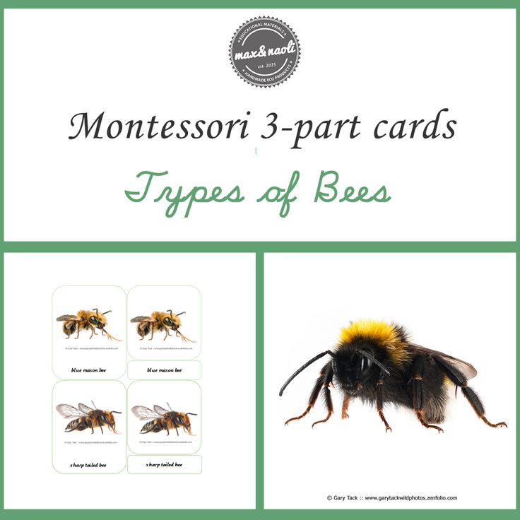 Free Montessori 3-part Cards - Types of Bees. Download now for FREE.