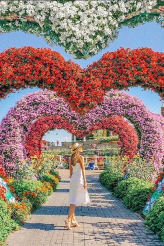 The Dubai Miracle Garden is a flower garden located in the