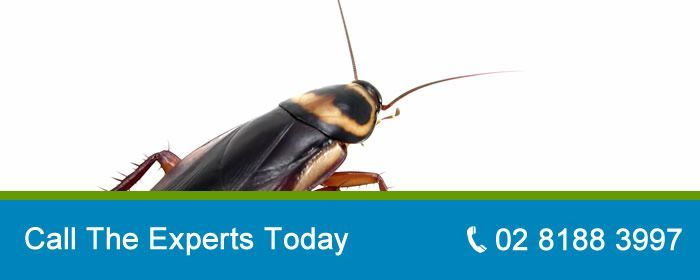 Looking For Affordable Pest Control We Provide Qualified Technicians Throughout Sydney Domestic And Commercial Experts Ta Pest Control Termite Control Pests