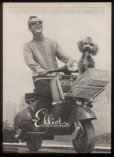 Unsafe at any speed. Vespa and dog.