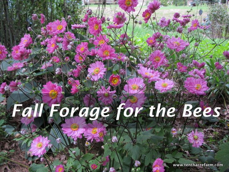 Fall Blooming Flowers For The Bees