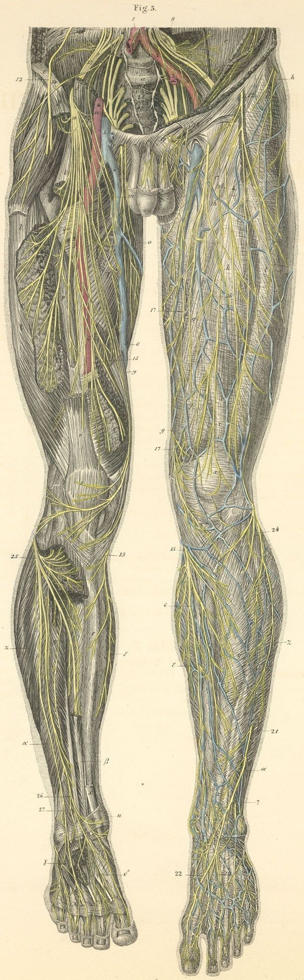 28 best Reference | Anatomy images on Pinterest | Character design ...