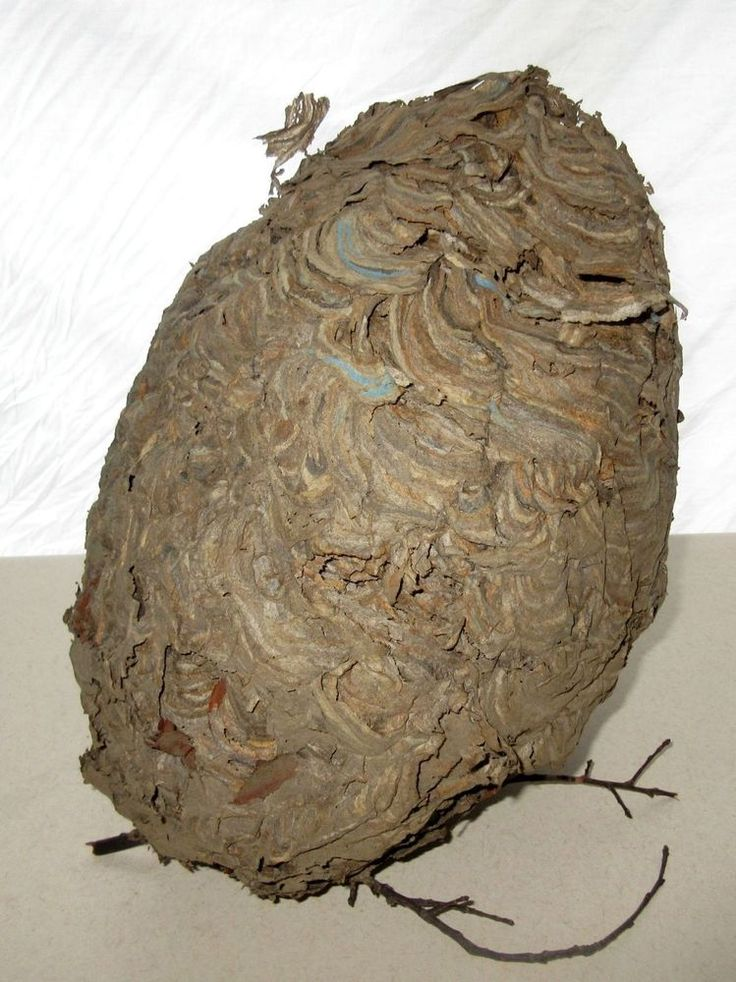 Vintage Tree Paper Wasp Hornet Nest Hive ~ Waves of Blue ~Taxidermy Display