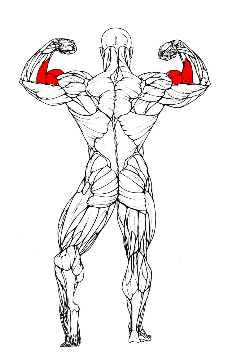 how to get your arms bigger and stronger