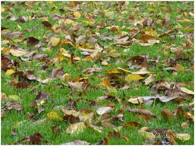 De Swieterij: fall in the garden