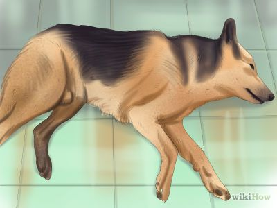 How to Know When Your Dog is Sick -- via wikiHow.com