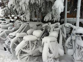 Snow Totaday!!!