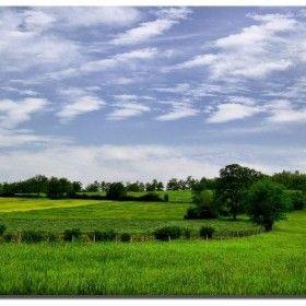 Mavi-yeşil Bir Doğa
