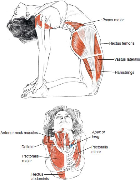 Ustrasana - Camel = Works the psoas, thighs, hammies, lungs, neck, delts, pecks and the muscles that make our beloved 6-Pack Abs! The psoas passively lengthens in this pose, as do the pecks, biceps and muscles of the collar. Keep the neck as relaxed as poss.