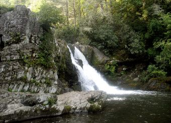 Abrams Falls - The five-mile round trip along Abrams Creek is a moderate hike that's worth every step.