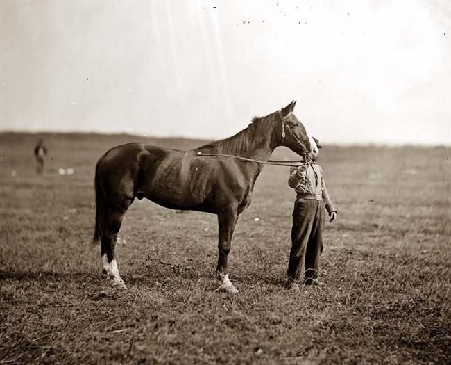"""Here we present a rare image of General George G. Meade's horse, """"Baldy."""" It was taken in 1863.: Picture, Civil Wars, General George, Civil War Photos, Meades Horse, Meade S Horse, War Horses, 1863"""