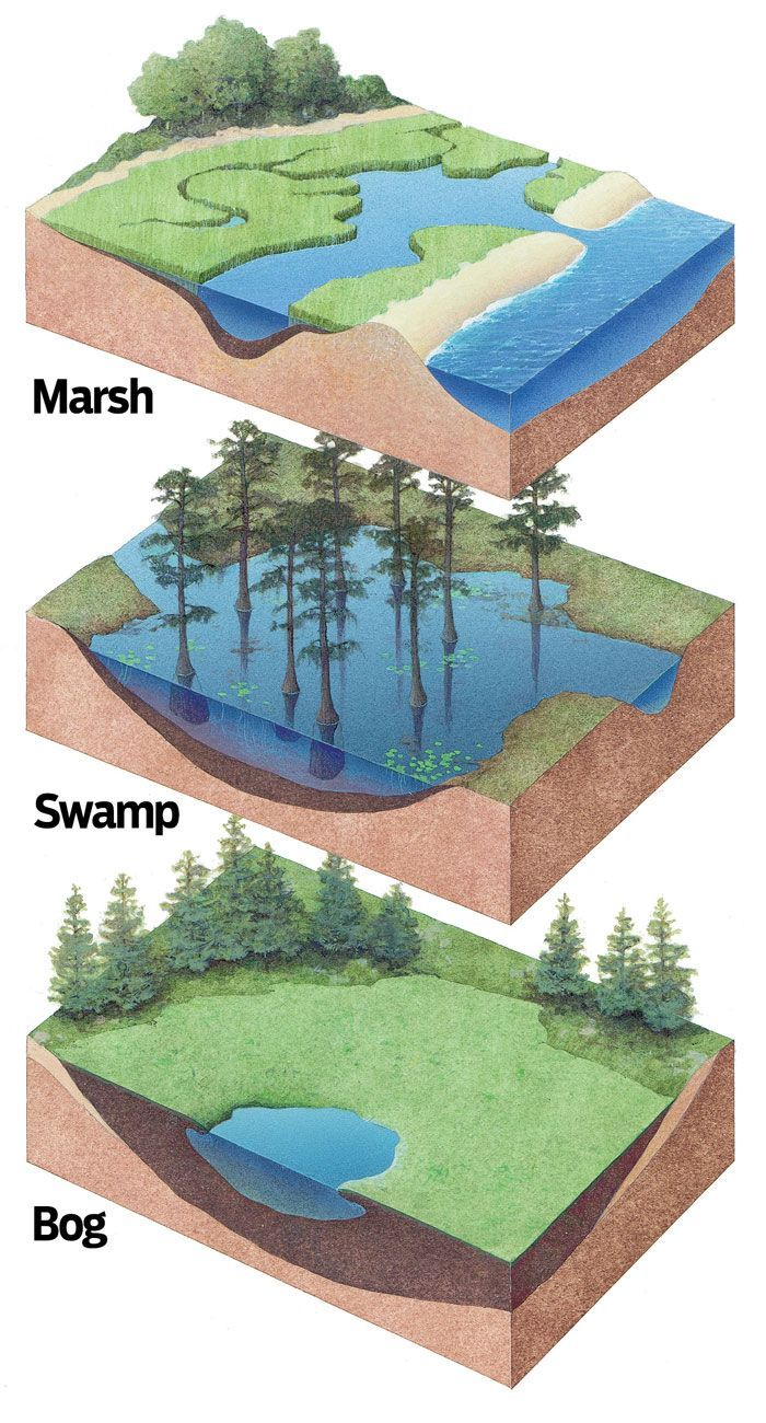 Infographic Marsh Swamp Bog Earth Science Lessons Science And Nature Biomes