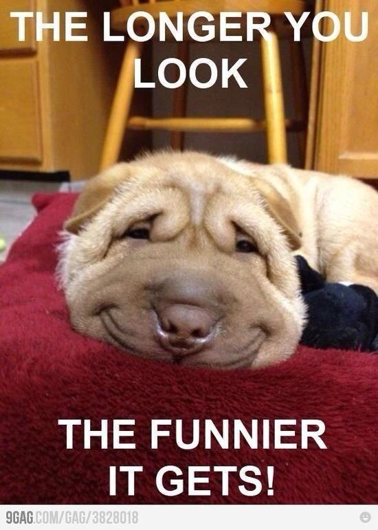 20 Funny Animals Memes #Funny Animals #Memes