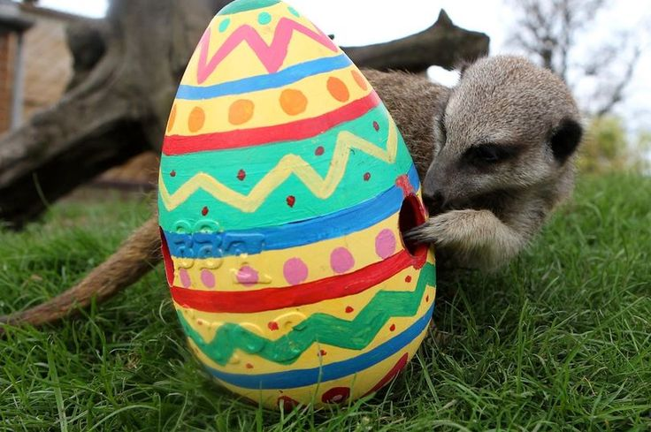 Why does the date for Easter Sunday change every year according to the lunar calendar? We've got all the answers to your questions