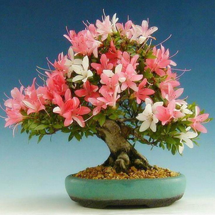 Цветок бонсай семена цветочных растений бонсай закрытый петунии лепестки цветок семена бонсай балкон-50 шт./лот