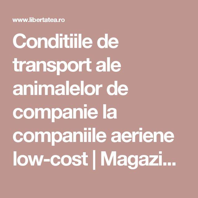 Conditiile de transport ale animalelor de companie la companiile aeriene low-cost | Magazin, Ştiri | Libertatea.ro