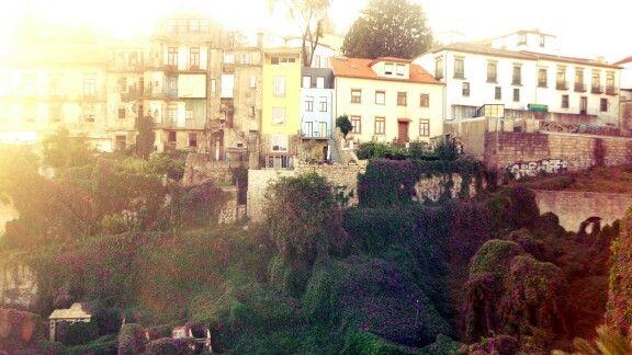 Flowers in Porto