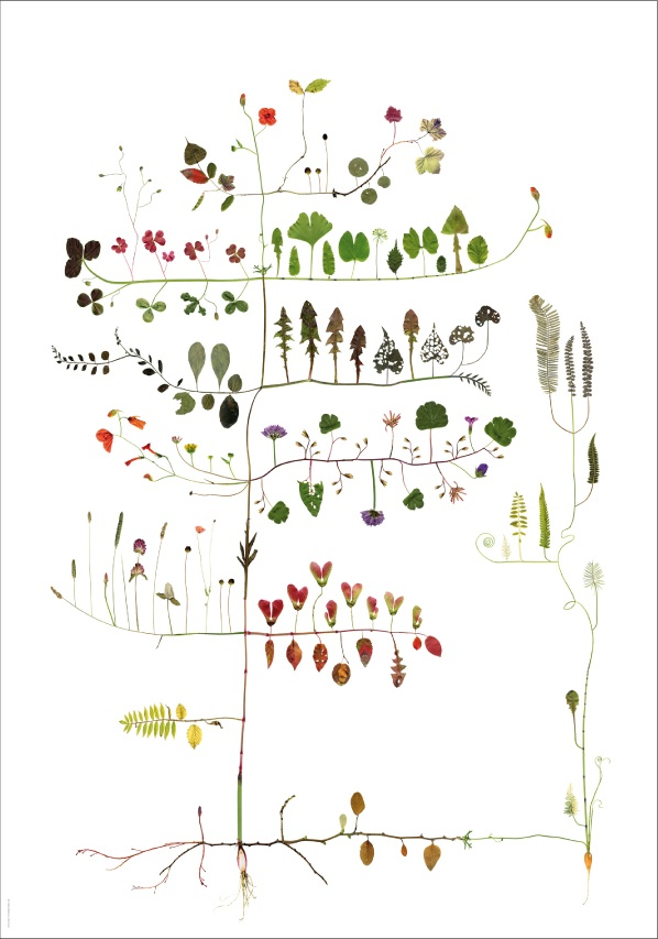 tree collage by Lotta Strad