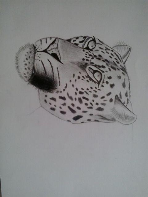 Eindresultaat van mijn tekening als oefening. Ik vind dat de zwarte vlekken en randen bij de ogen een mooi effect geven. Het zwarte vak boven de mond moet iets breder zijn bij mijn echte tekening. Zo lijkt het namelijk net een tong.