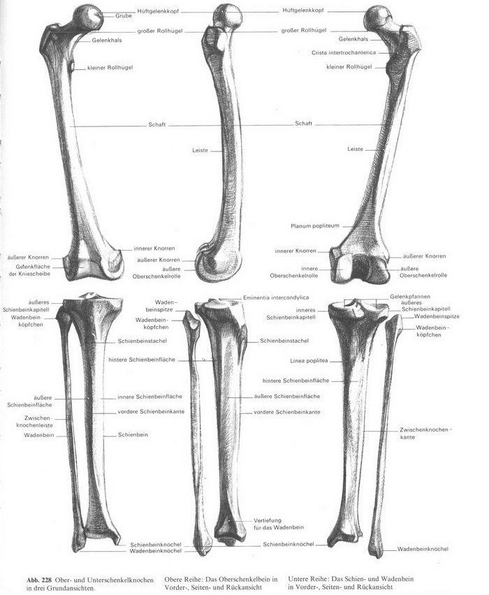 Wunderbar Makroskopische Anatomie Klasse Ideen - Anatomie Ideen ...